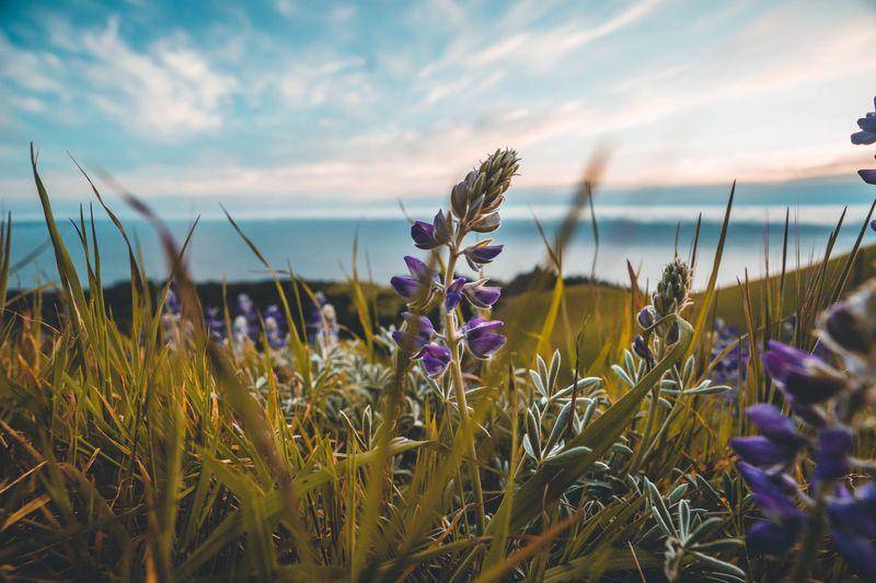 Photo of Purple Flowers in Field