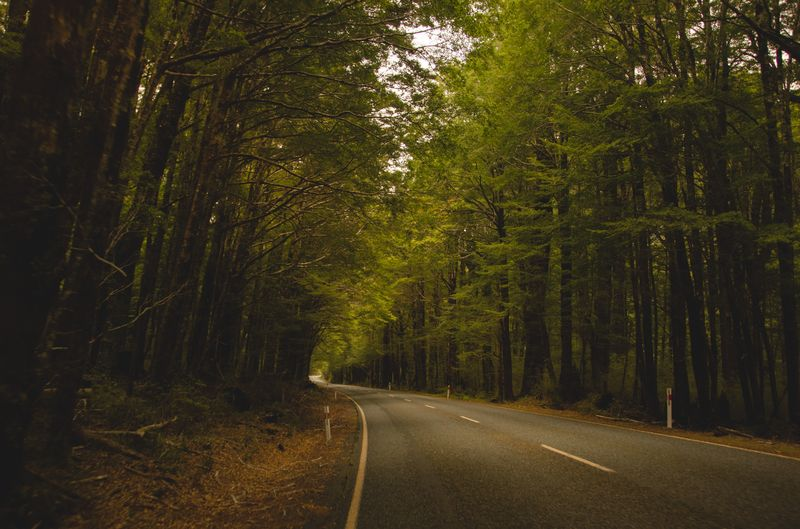 Photo of Road Through Forest
