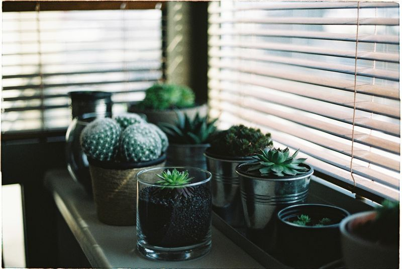 Photo of Potted Plants