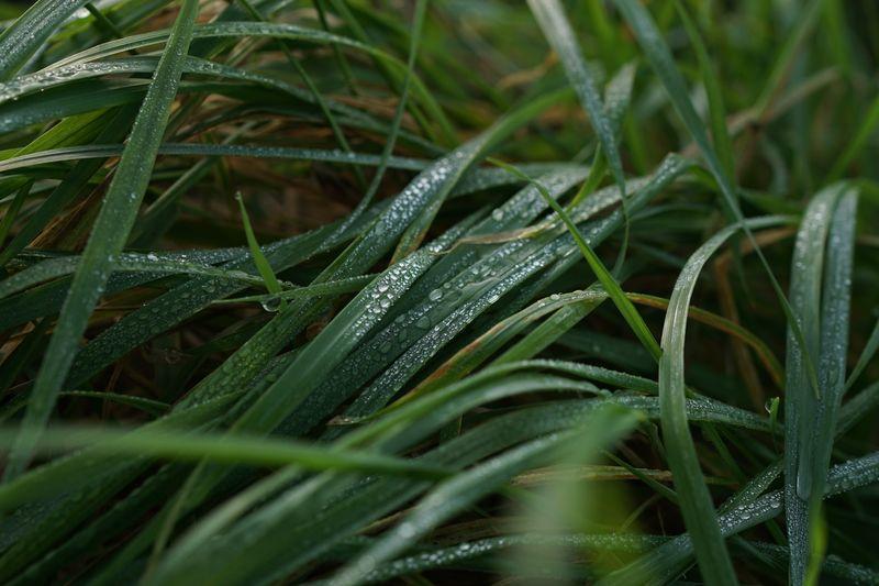 Photo of Wet Grass