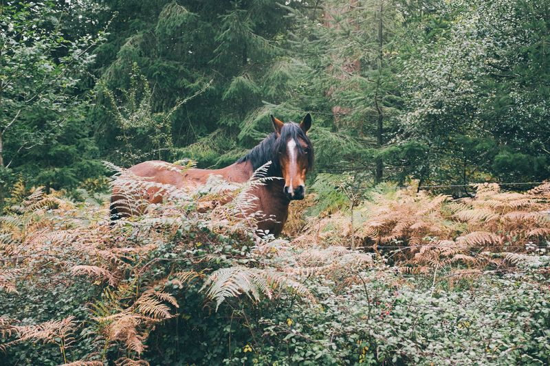 Photo of Horse and Plants