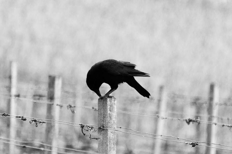 Photo of Bird on Fence Post