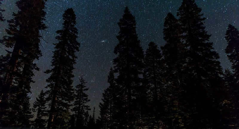Photo of Forest Trees and Starry Sky