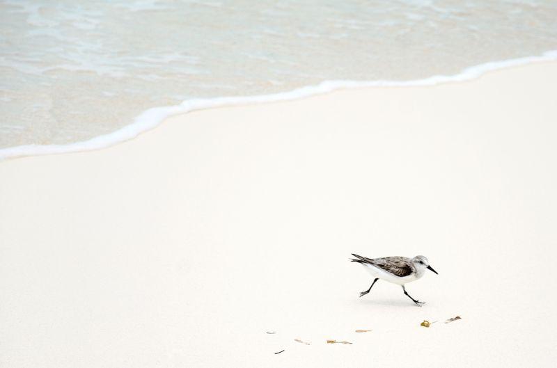 Photo of Bird on Beach