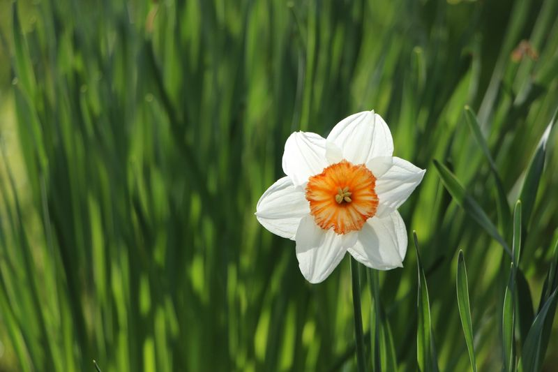 Photo of White Flower