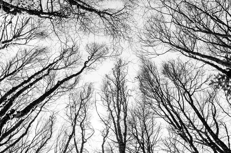 Photo of Forest Trees Leafless