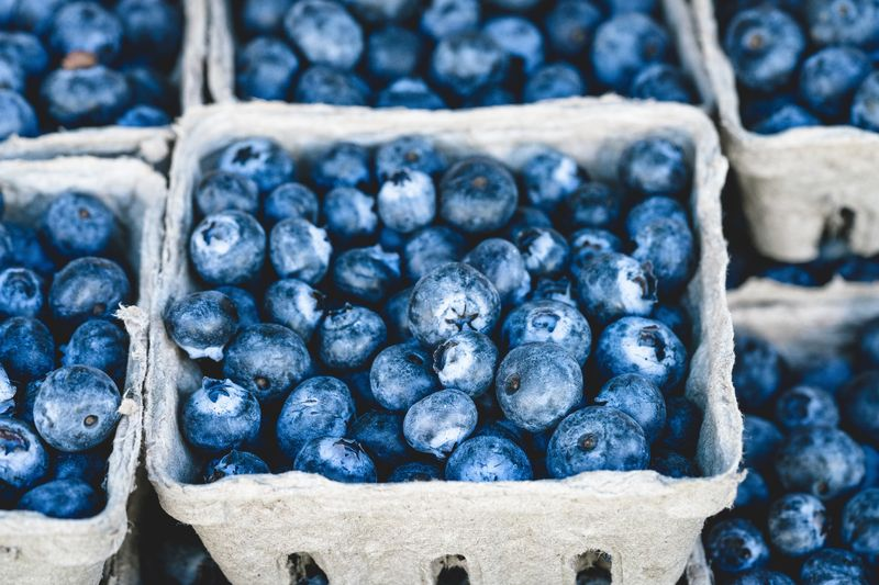Photo of Blueberries in Containers
