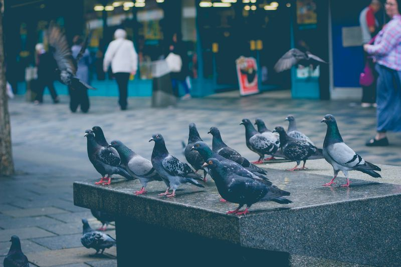 Photo of Pigeons on Bench