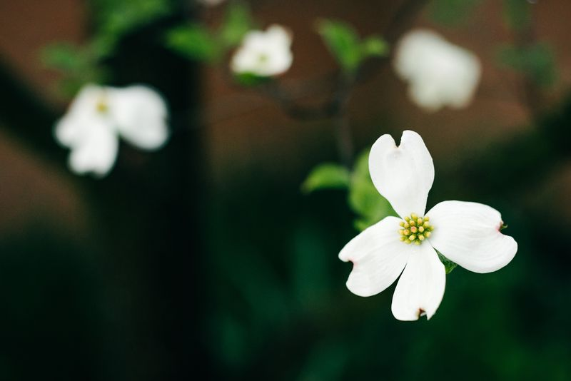 Photo of White Flowers