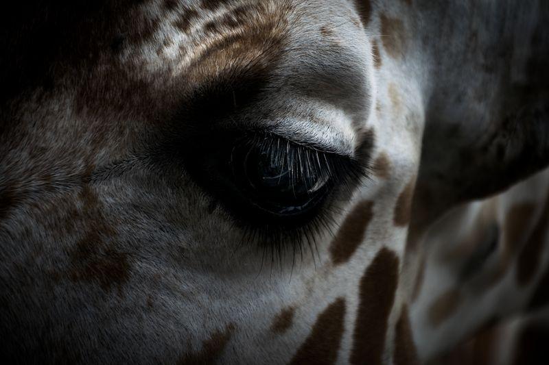 Photo of Giraffe's Eye