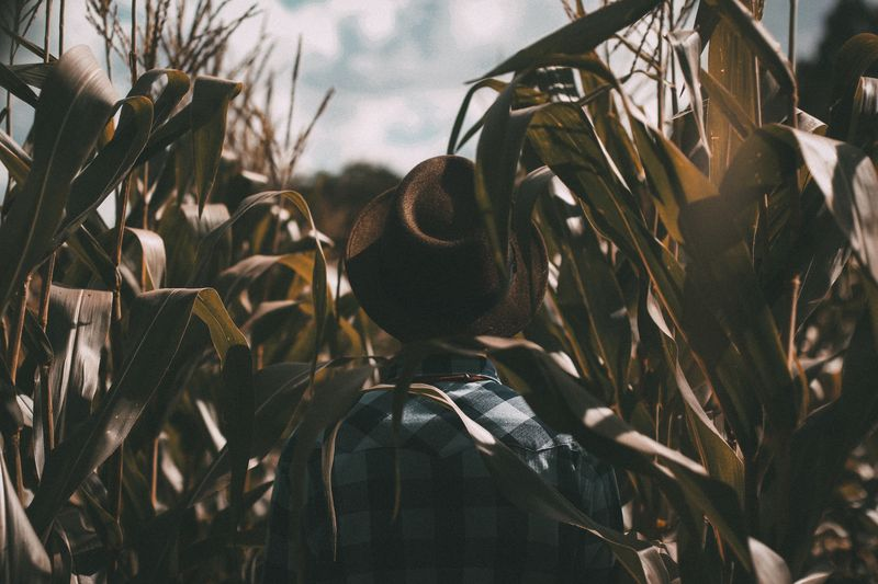 Photo of Person in Crop Field