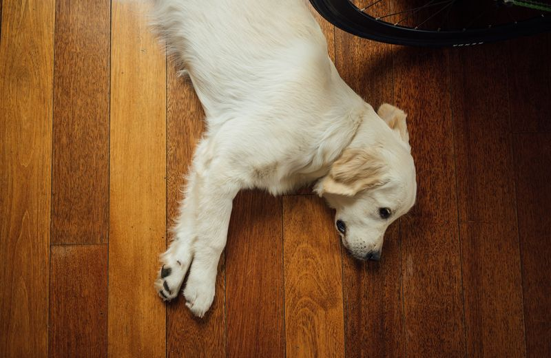 Photo of Dog on Floor