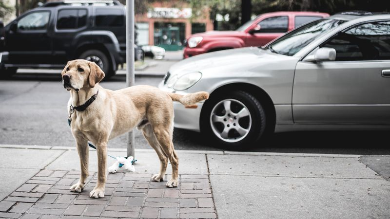 Photo of Dog by Street