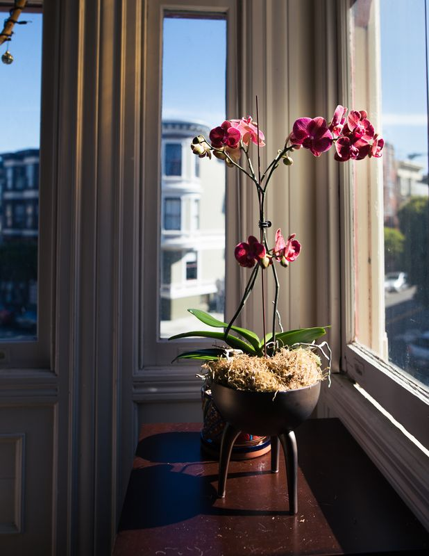 Photo of Pink Flowers in Window