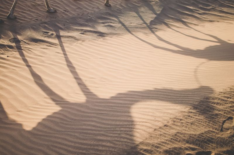 Photo of Camels' Shadows