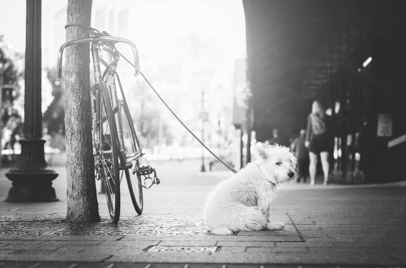 Photo of Dog on Leash