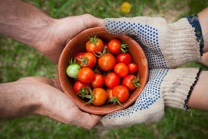 Photo of People Holding a Bowl of Tomatoes