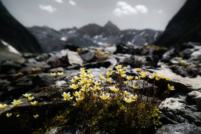 Photo of Flowers and Mountains