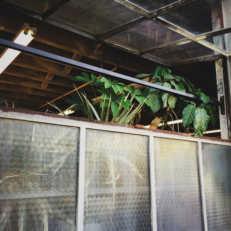 Photo of Plants in Greenhouse